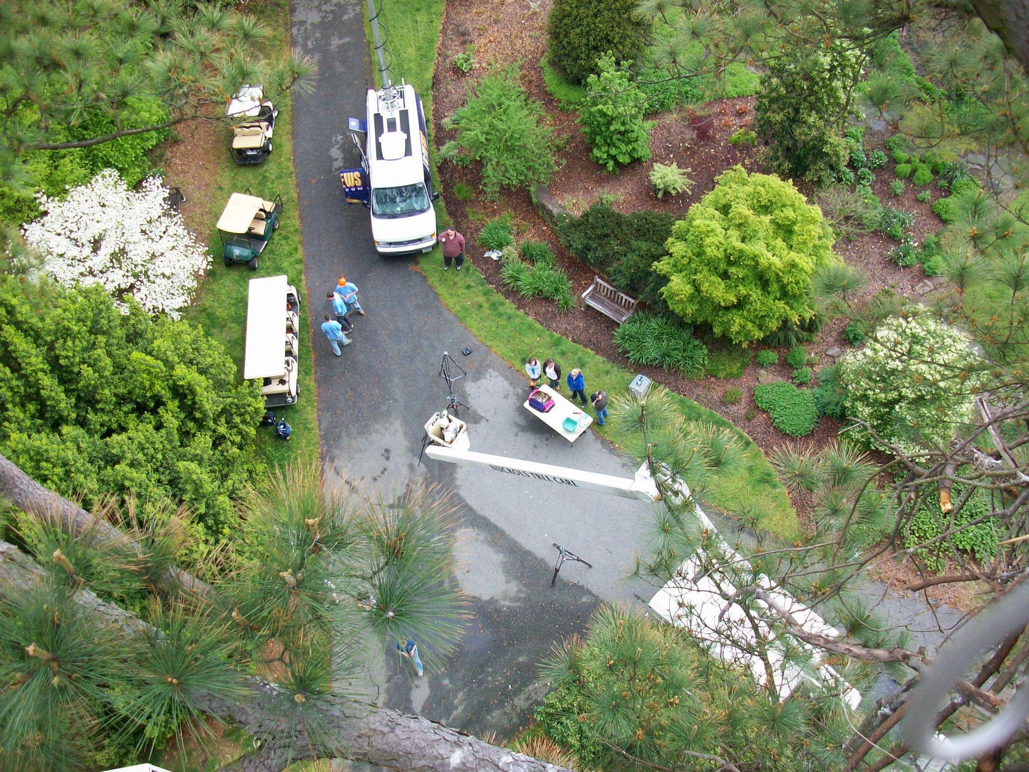 Bald Eagles At Norfolk Botanical Garden Nuckols Tree Care